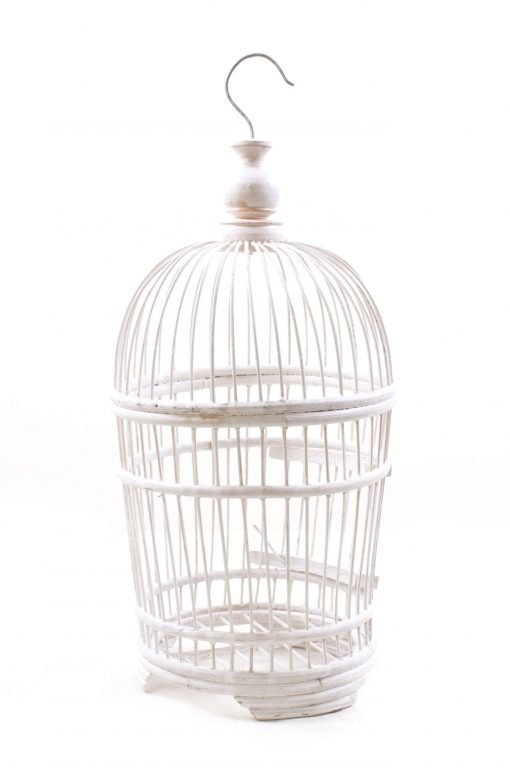Birds & Cages BCG-0519